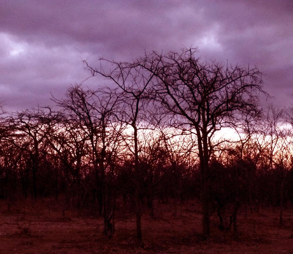 Sunrise at bush camp